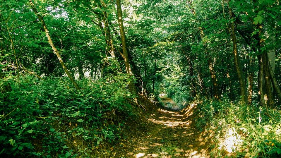 Medimurski ceker lokacija šumski puteljak
